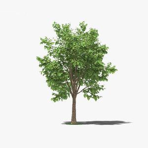 teak tree 3D