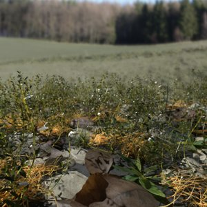 pbr knotweed meadow patch 3D