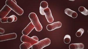 bacillus bacteria model