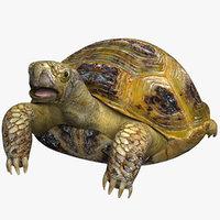 Turtle Terrestrial
