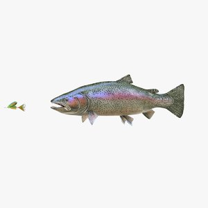rainbow trout model