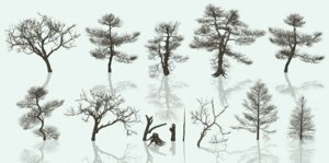 dead trees 3D