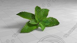 leaf mint 3D