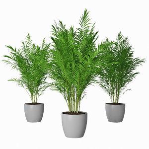 areca palms 3D model