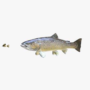 brown trout 3D model