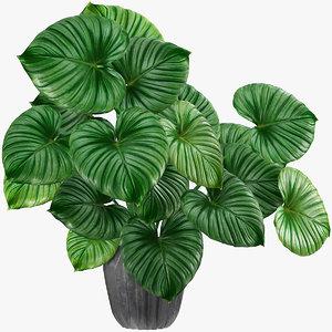 3D tropical leaves model