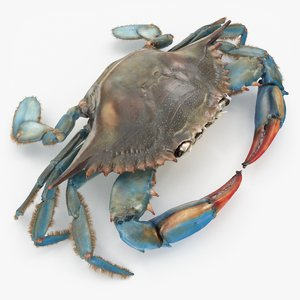 3D rigged blue crab animation