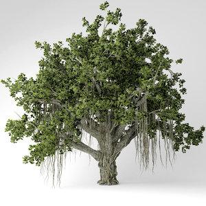 3D chinese banyan tree