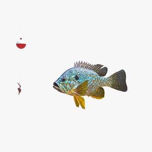 animation fish model