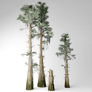 bald cypress tree 3D model