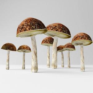 bolete mushrooms 3D model