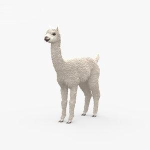3D alpaca mammal animal model