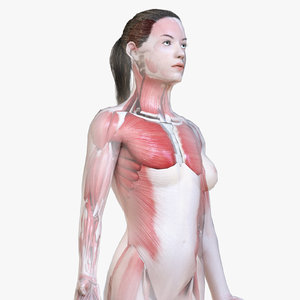 female body skeleton muscles 3D model