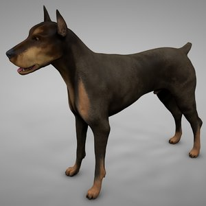 3D doberman rigged l614