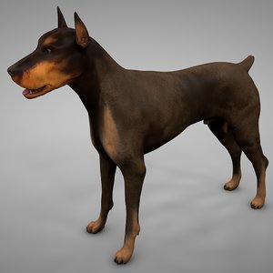3D doberman rigged l611 animate model