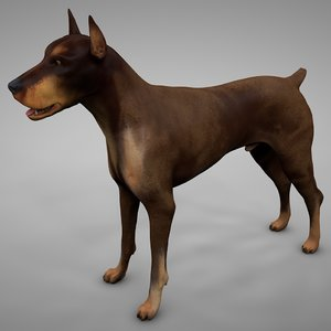 3D model doberman rigged l621