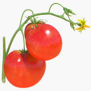 tomato branch red 3D model