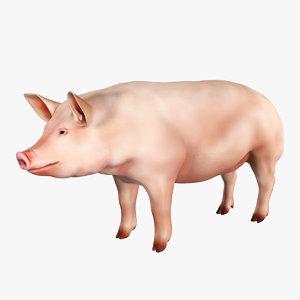 pig animal mammal 3D