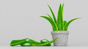 vera aloe plant model