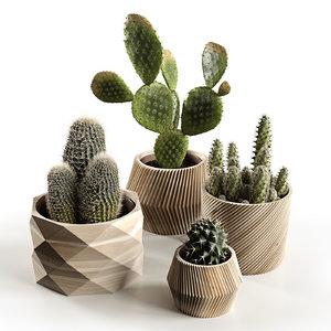 3D cactus nature