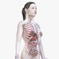 Female Body, Skeleton and Organs (Low Poly)