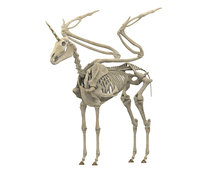 Alicorn Skeleton