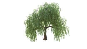 willow tree 3D model