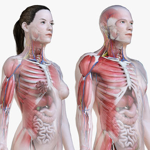 3D set male female anatomy