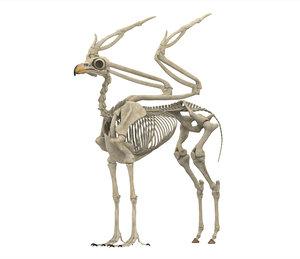 3D model hippogriff skeleton