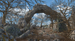 rock forest 3D
