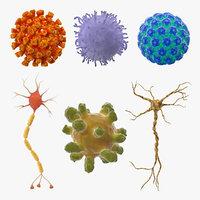 Microscopic Anatomy Collection 3