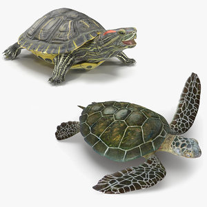 3D model turtles rigged