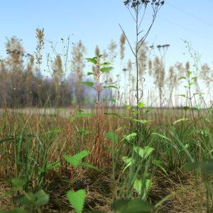 pbr grass leaf starwort 3D