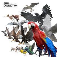 Bird Fur Collection