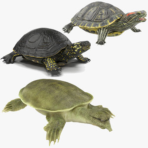 3D turtles rigged 2
