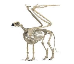 griffin skeleton 3D model