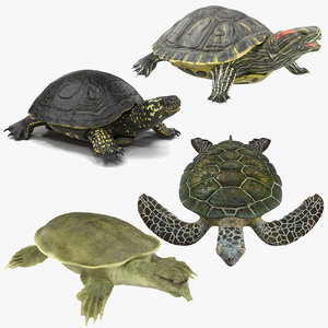 turtles rigged 3 model