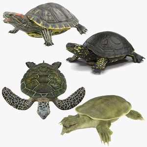 3D model turtles rigged 3