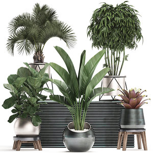 3D model exotic plants potted
