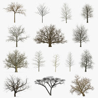Winter Trees Collection 5