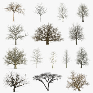 winter trees 5 3D model