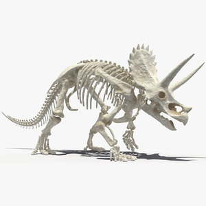 3D model triceratops horridus skeleton rigged