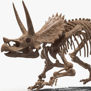 triceratops skeleton fossil rigged 3D model