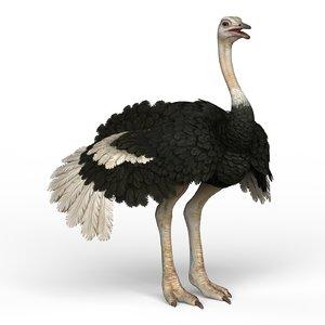 ostrich materials pbr 3D
