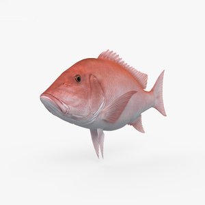 northern red snapper 3D model