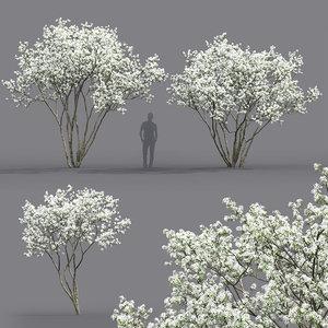 3D flowering trees 2 model