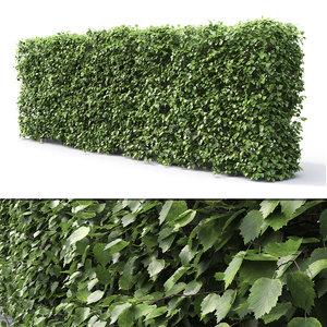 hedge 2 1 3D model