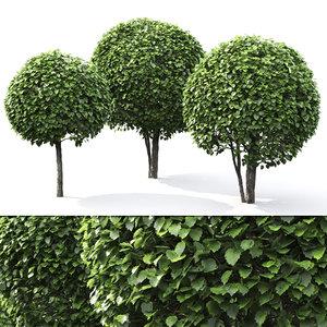 3D trees crataegus globe