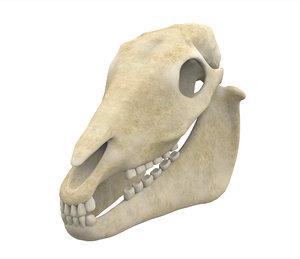 horse skull model