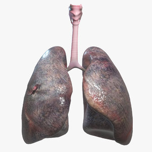 human lungs model
